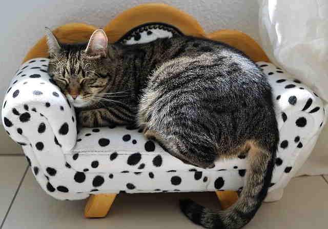 cat sleeping habits