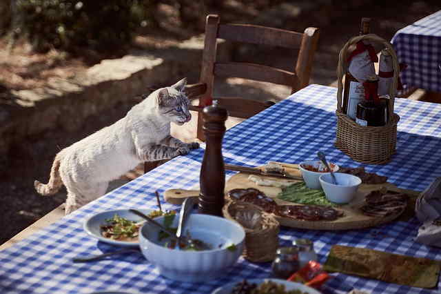 Poisonous food for Persian cat